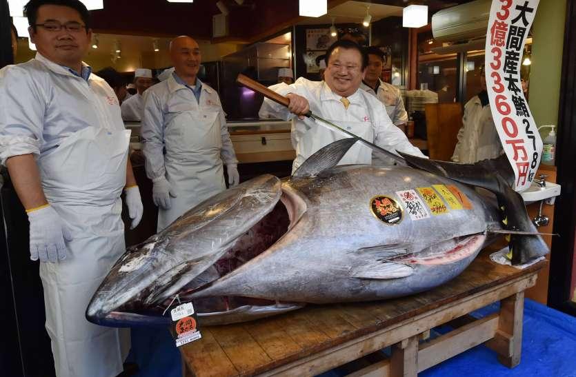 कियोशी कीमुरा ने नए साल पर खरीदी टूना मछली, लगाई 13 करोड़ रुपए की बोली