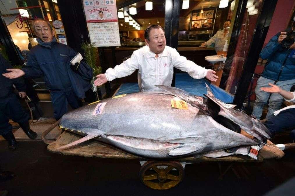 japan-tuna-king_5e11e2633d972.jpg