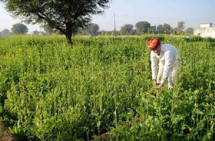 सर्दी से रबी की फसलों को फायदा, किसानों के चेहरे खिले