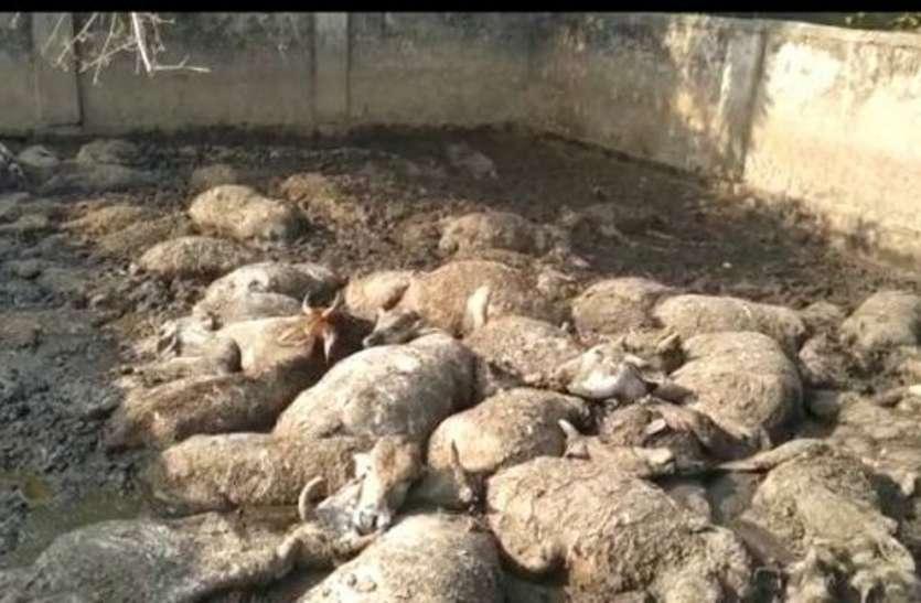 कांजी हाऊस में भूख से तड़प-तड़प मर गए 74 से ज्यादा मवेशी, कमिश्नर ने बठाई जांच