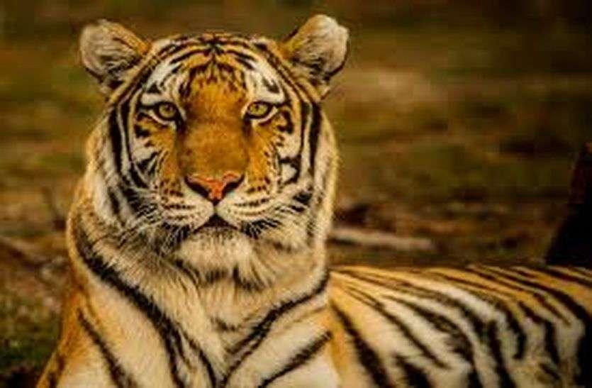कुंभलगढ़ टाइगर रिजर्व के लिए बढ़ाया जाएगा 25 वर्ग किलोमीटर का क्षेत्र