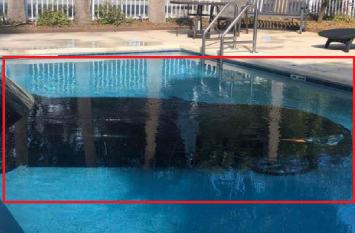 OMG! होटल के स्विमिंग पूल में घुसाई कार, ड्राइवर हुआ फरार
