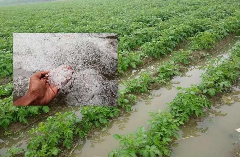 ओलावृष्टि से भारी नुकसान, बाजार में सब्जियों के रेट में जल्द भारी उछाल