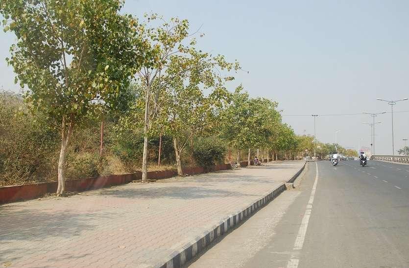 उत्तर प्रदेश बनेगा सुदंर प्रदेश,एक सड़क एक पेड़ का सिद्धांत होगा लागू