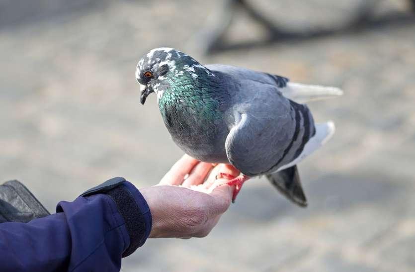 भीड़ में भी ट्रैफिक पुलिसकर्मी को पहचान लेते हैं पक्षी, लोगों ने कहा ये हैं असल बर्डमैन