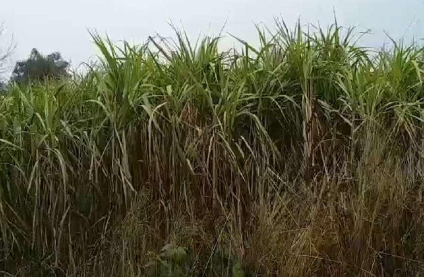 गन्ना किसानों का 75 करोड़ दबाए बैठी है चीनी मिल, परेशान हैं किसान