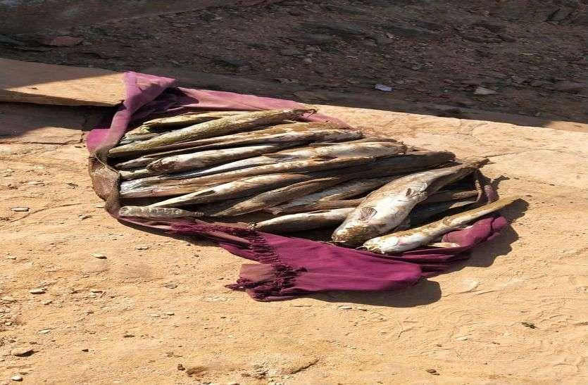 रूण के तालाब में मिली मृत मछलियां