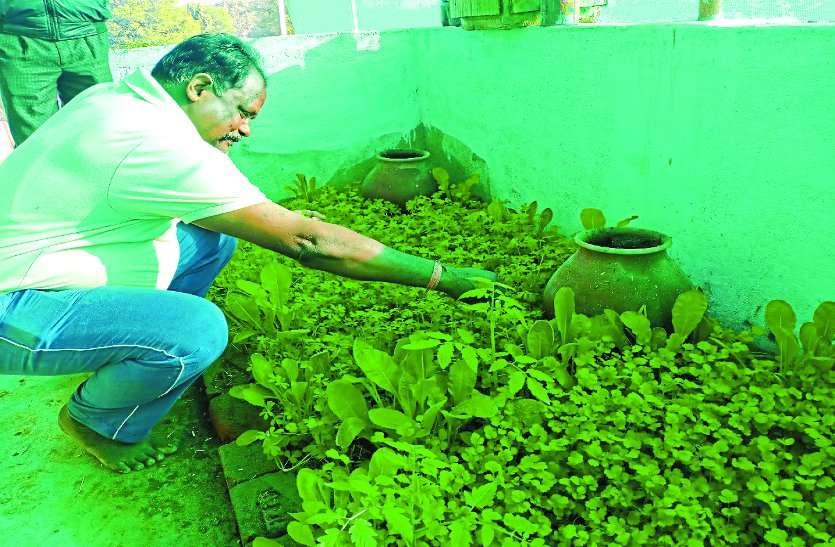 घर की छत पर बनाया गार्डन और उगा दिए 40 प्रकार के दुर्लभ प्रजाति के औषधीय पौधे