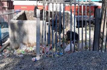 कचरा डंप की जगह ठेकेदार ने लगा दिए गिट्टी के ढेर, अब कचरा डालने कर्मचारी हो रहे परेशान, पढ़ें खबर