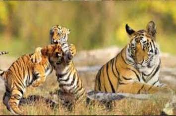 ईमानदारी की होती है सदैव जीत, पढ़िए जंगल के जानवरों की यह छोटी सी कहानी