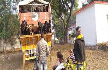 एक ट्रक में लोड थीं 270 बकरियां , ट्रक जब्त