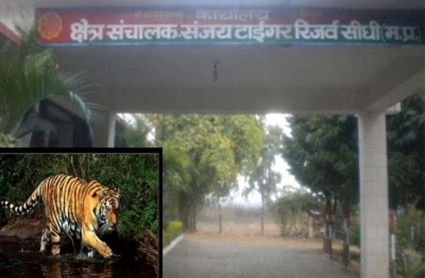 Sanjay Tiger Reserve: दो दिन पहले ही हो चुकी थी तेंदुए की मौत, वन अमले ने किया अंतिम संस्कार