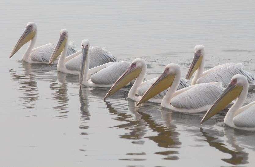 नजर नही आ रहा झील संरक्षण मिशन,वैट लैंड भी नहीं हो सका विकसित