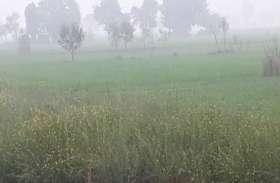 बेमौसम तेज बारिश व ओलों ने किसानों पर बरपाया कहर, फसलों को भारी नुकसान, बिस्तर की तरह खेतों में बिछीं, देखें वीडियो