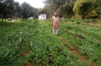पपीता व नीबू के साथ अंतरवर्ती खेती से बढ़ाई आमदनी, देखें वीडियो