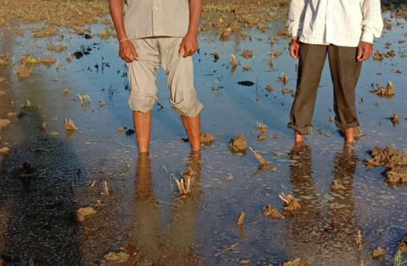 बेमौसम बारिश से रबी फसलों को भारी नुकसान
