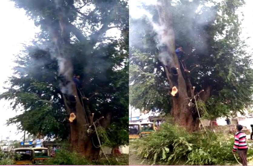ऐसा हुआ चमत्कार जब पेड़ से धुआं निकलते देख काटी टहनियां, तो निकलने लगीं आग की लपटें