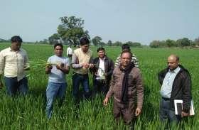 खेतों तक पहुंचे कृषि वैज्ञानिक, कृषि विभाग के अधिकारी