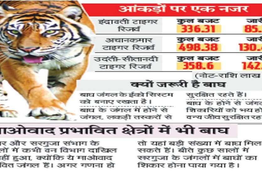 छत्तीसगढ़ में कितने बाघ? अब तो 18 का भी दावा नहीं कर रहा वन विभाग