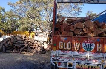 खेर की 24 टन लकडिय़ां बरामद