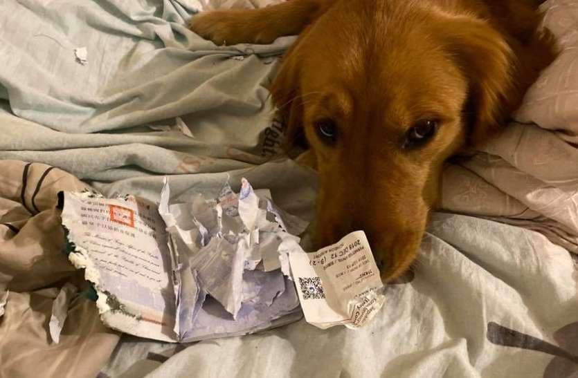 कुत्ते ने पासपोर्ट नोंच बचाई अपनी मालिकन की जान