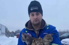 एक शख्स ने गर्म कॉफी के इस्तेमाल से बिल्ली के बच्चों को बचाया, बर्फ में जम गई थी तीनों की पूंछ