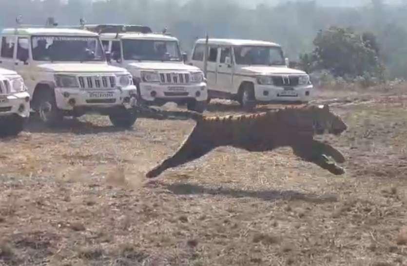 सात साल पहले बाघ शिकार के समय खिरदुर गांव में थे कटनी के दो पारधी युवक!
