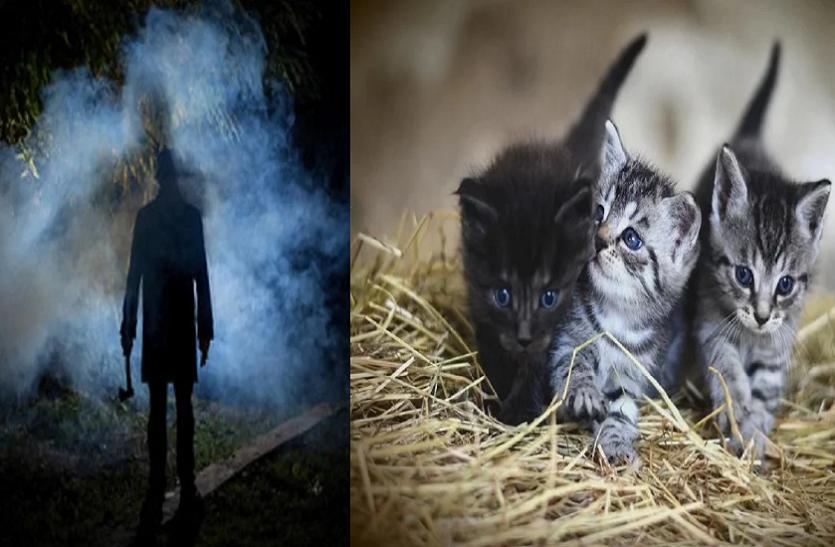 OMG! इस सीरियल किलर ने इंसानों का नहीं 'बिल्लियों' का किया था कत्ल