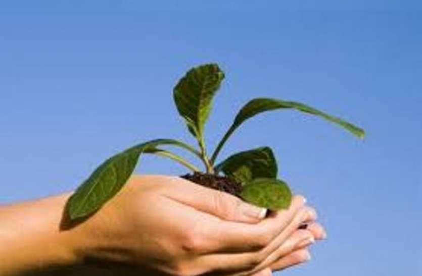 Plantation: दस हजार पौधे के लक्ष्य से इंजीनियरों को आया पसीना