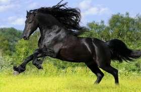 सपने में ऐसा करता हुआ दिखाई दे घोड़ा तो आपको मिलने वाला है खूब सारा धन