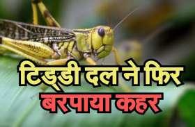 Pakistani locusts का हमला, प्रशासन ने जारी किया हाई अलर्ट, जानिए लक्षण और बचाव के उपाय