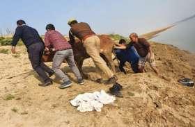 जिला जज ने पेश की मानवता की मिसाल, चंबल में डेढ़ घंटे रेस्क्यू कर बचाई गाय की जान