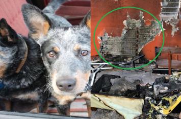 2 डॉग ने लगाई घर में भयंकर आग, वीडियो में देखिए कैसे सामान जलकर हुआ खाक