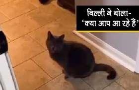 मालिक के उस वक्त उड़े होश, जब बिल्ली ने बोला- 'क्या आप आ रहे हैं'