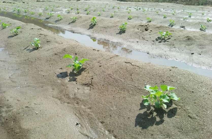 बार-बार हो रही बारिश से खेती पर असर, इस बार नहीं लग सकी डंगरबाड़ी