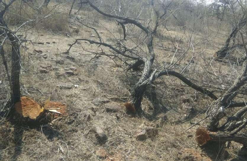 मशीनों से माफिया काट ले गए खैर की लकड़ी, वन अमले को पता नहीं