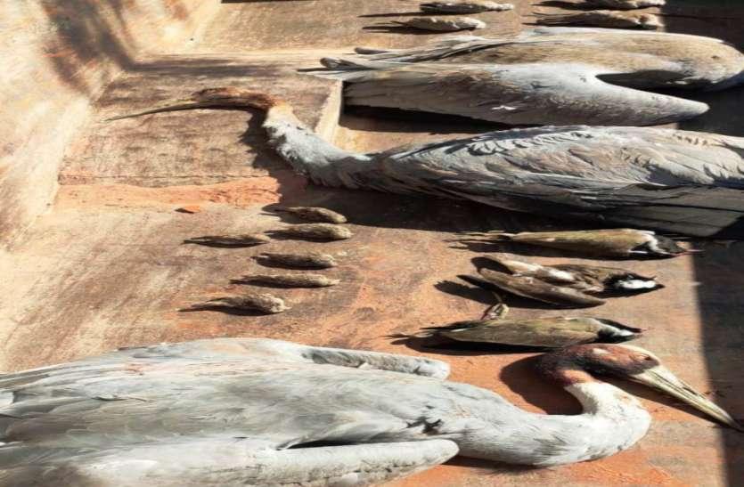 इटावा में डेढ़ दर्जन दुर्लभ पक्षियों की मौत