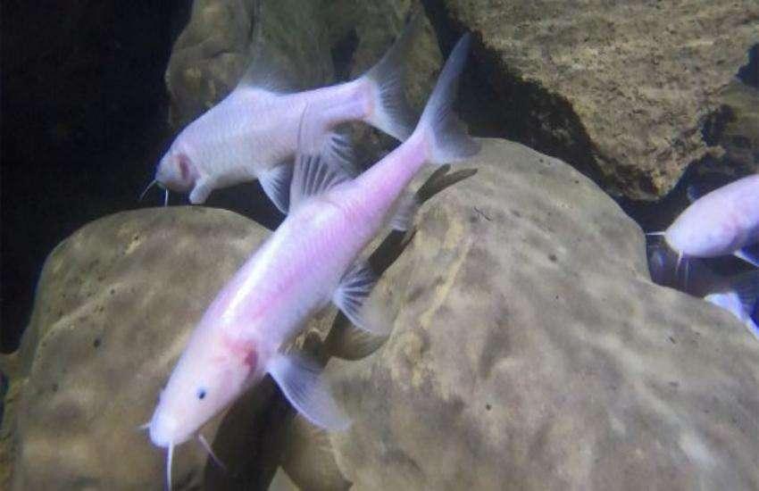 fish-photo-.jpeg