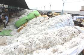 22 लाख गठान कॉटन उत्पादन वाला खरगोन सबसे बड़ा जिला