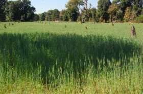 पढ़े, प्रोत्साहन राशि के अभाव में पंजीयन में रूचि नहीं दिखा रहे किसान