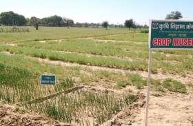 ये है शेखावाटी का क्रॉप म्यूजियम: किसान जान सकते हैं यहां उन्न्नत किस्मों के बारे में