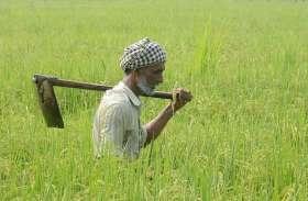 राजस्थान के 13 लाख किसानों को लगा जोरदार झटका