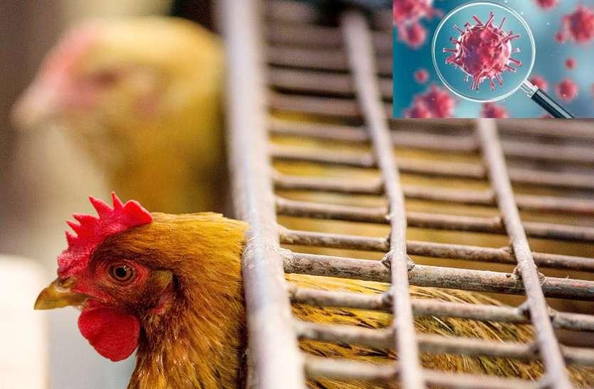 कोरोना का डर: छत्तीसगढ़ में अंडा और बायलर कारोबार में 50 फीसदी तक गिरावट
