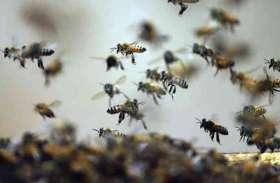 मधु मक्खियों के हमले से 11 श्रद्धालु जख्मी, अस्पताल में चल रहा उपचार