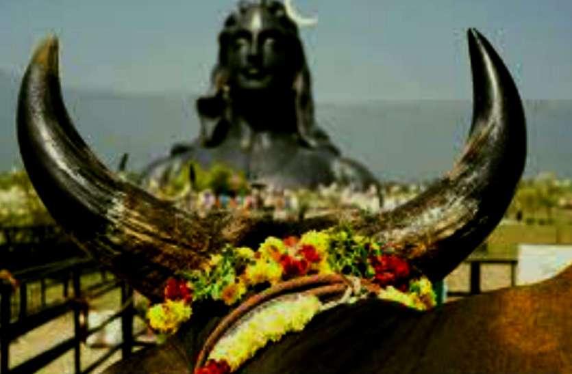 59 साल बाद महाशिवरात्रि पर बन रहा राजयोग, इस तरह करेंगे पूजा तो होगा विशेष लाभ