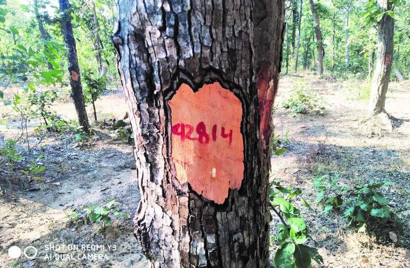 मदनपुर कोल ब्लॉक : विरोध के बीच गिनती किए गए 71 हजार पेड़