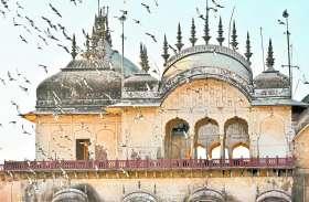 अलवर मूसी महारानी की छतरी के पास रात में पैंथर का राज