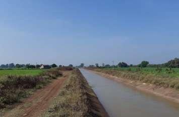 जिले में ग्रीष्मकालीन मूंग का रकबा तीन गुना बढऩे का अनुमान
