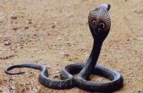 सांपों से भरे कुएं में गिरा युवक, ग्रामीणों ने निकाला बाहर तो पैंट से निकला कोबरा