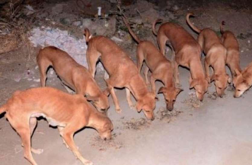 आवारा कुत्ते बन गए करोड़पति, हर डॉगी के पास है 1 करोड़ रुपए की संपत्ति